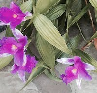 Orchid bambo
